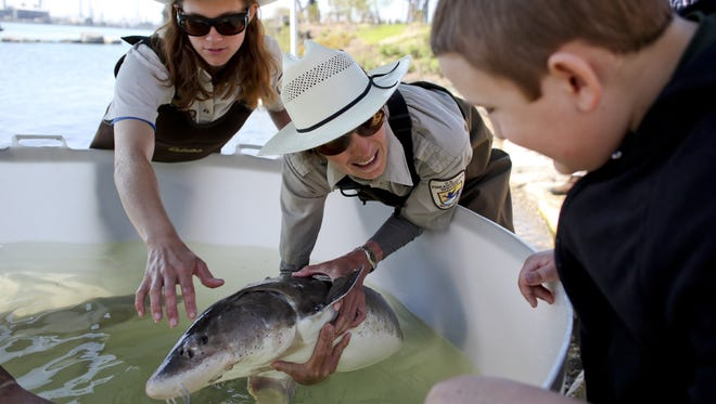 U.S. Fish and Wildlife fish biologists Margaret Hutton and Eric Stadig show a sturgeon to Alex Armstead of Port Huron during the Blue Water Sturgeon Festival.