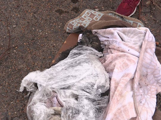 The puppy was found Friday on a sidewalk on the city's northwest side.