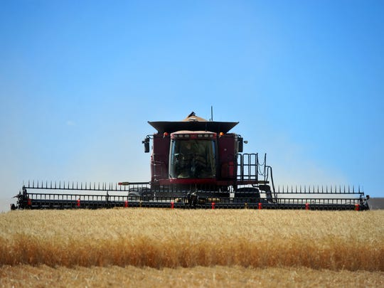 The wheat harvest is in full swing on the Bumgarner farm east of Great Falls. A global excess of wheat has driven prices down recently worrying wheat producers around the region.