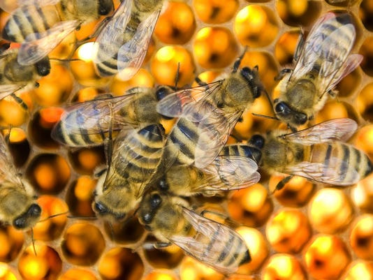 Bee Keepers Working To Ensure Longevity Of Common Honey Bees In The US