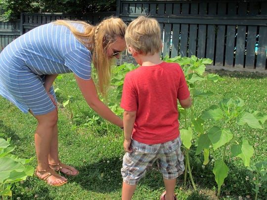 In this July 7, 2016, photo, teacher Margaret Gerowe helps a student try to determine which sunflower plant is the tallest, at Annette's Preschool in Hinesburg.  Vermont has become the first state to extend publicly funded pre-kindergarten programs to all 3-year-olds as of this month.