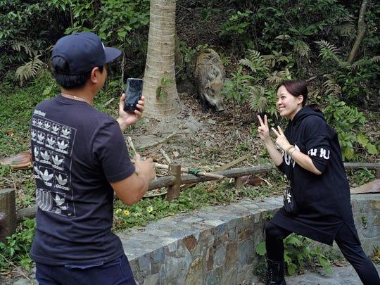 Hong Kong Wild Boar Dilemma