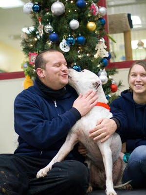 Moonbeam left Save-A-Pet as a puppy 10 years ago and just made a 900-mile trip back to Grayslake, Ill., from Huntington, N.Y., where he ended up in a shelter. Here he gives kisses to Erik Brown and Stephanie Clark at the shelter.