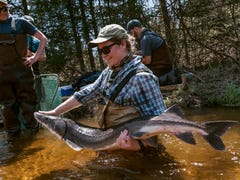 How a party in the woods Up North is helping Michigan sturgeon survive