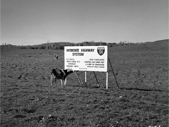 A cow checks out a sign with some details of the construction of Interstate 91.