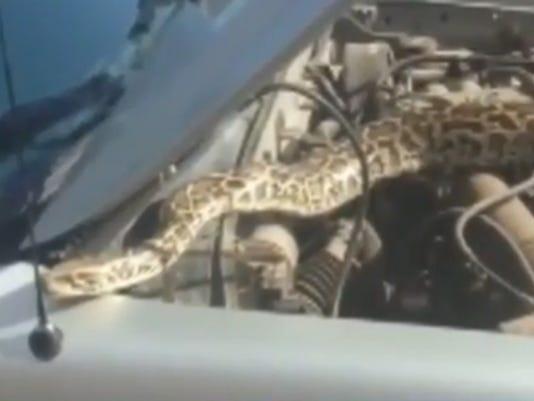 Snake in car