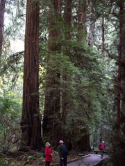 Visitors on the Fern Creek Trail look up at giant redwood