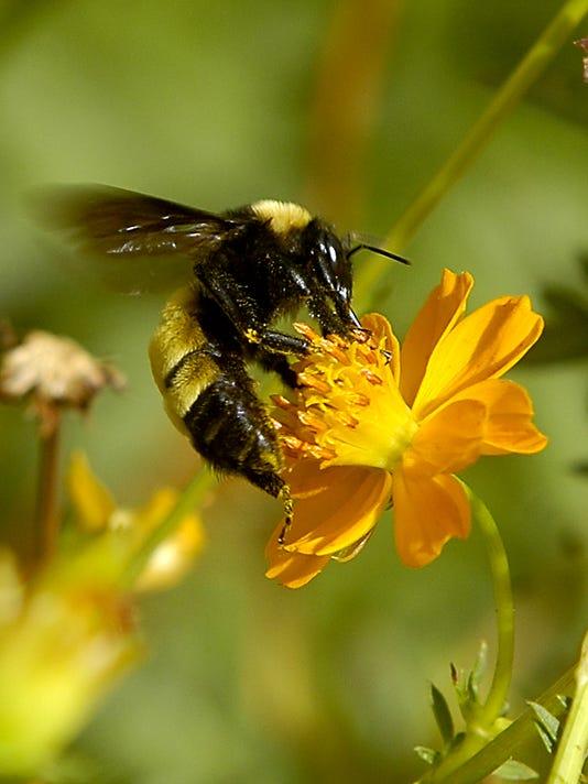MLC bee-for-MLC-calendar.jpg