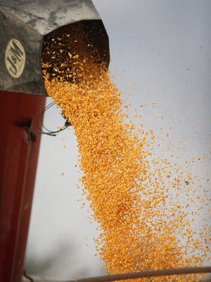 Corn is loaded into a grain wagon during a harvest on October 2, 2013 near Salem, South Dakota.