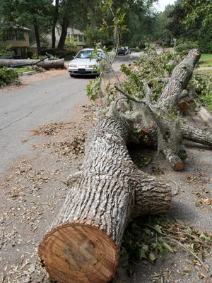 Thanks to the Ison family, a car is able to makes its way past a huge tree that fell across Fogarty Drive during Hurricane Hermine in Tallahassee, FL on Sunday, September 4, 2016.   According to Fogarty Drive resident Bill Edwards, the Wakulla County evacuee family drove around the area with a chainsaw helping others free of charge.  All they asked is to pay it forward.