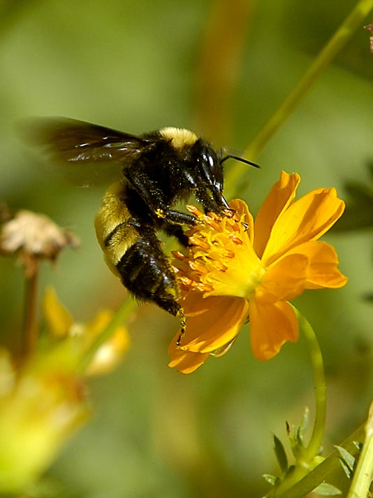 bee-for-MLC-calendar.jpg