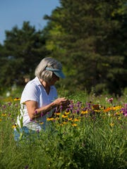 Dorothy Messner pulls weeds Wednesday in a field of