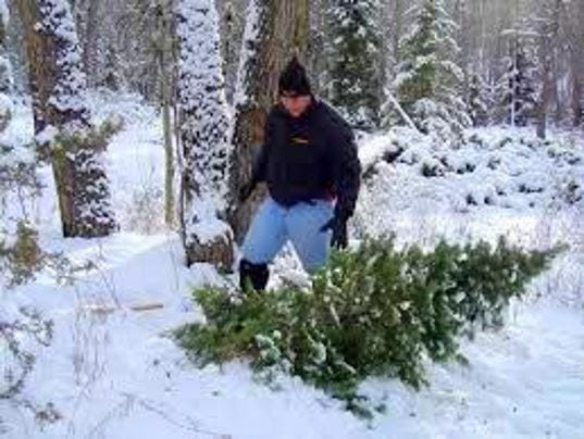 BLM offers Christmas tree permits