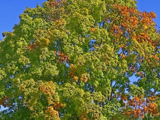 BHM leaf collection