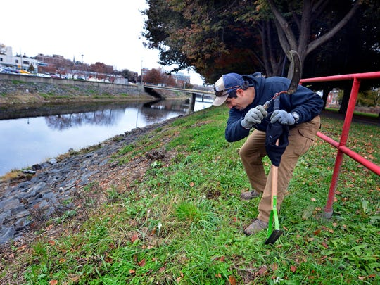 Ted Evgeniadis, the Lower Susquehanna River Keeper works to clear vegetation along the bank of the Codorus Creek between King and Princess Streets, Tuesday, Nov. 14, 2017.   John A. Pavoncello photo