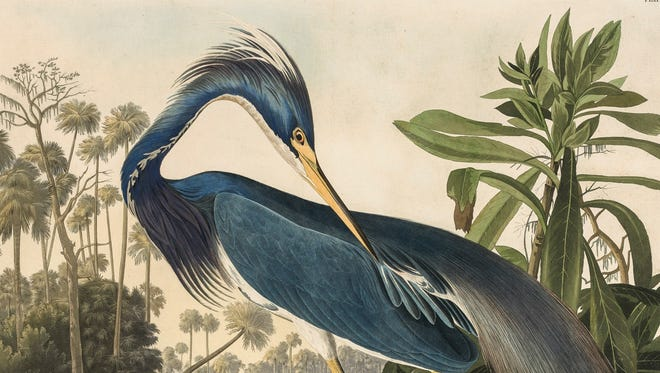 "John James Audubon (American, 1785-1851), Robert Havell (English, 1793-1878) (engraver), ""Louisiana Heron (Tricolored Heron),"" 1827-1838, hand-colored engraving, 25-3/4 × 20-3/4 in. (plate). On loan from a private collection."
