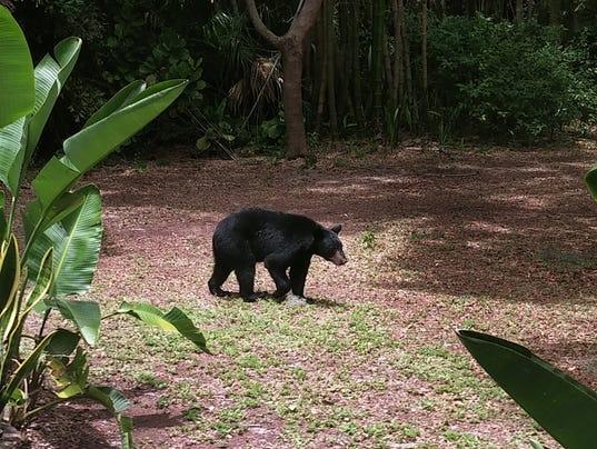 bearFILE.jpg