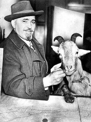 Late Billy Goat Tavern owner Sianis with pet goat, Murphy, whose entry was denied to a World Series game, prompting a famous Cubs curse.