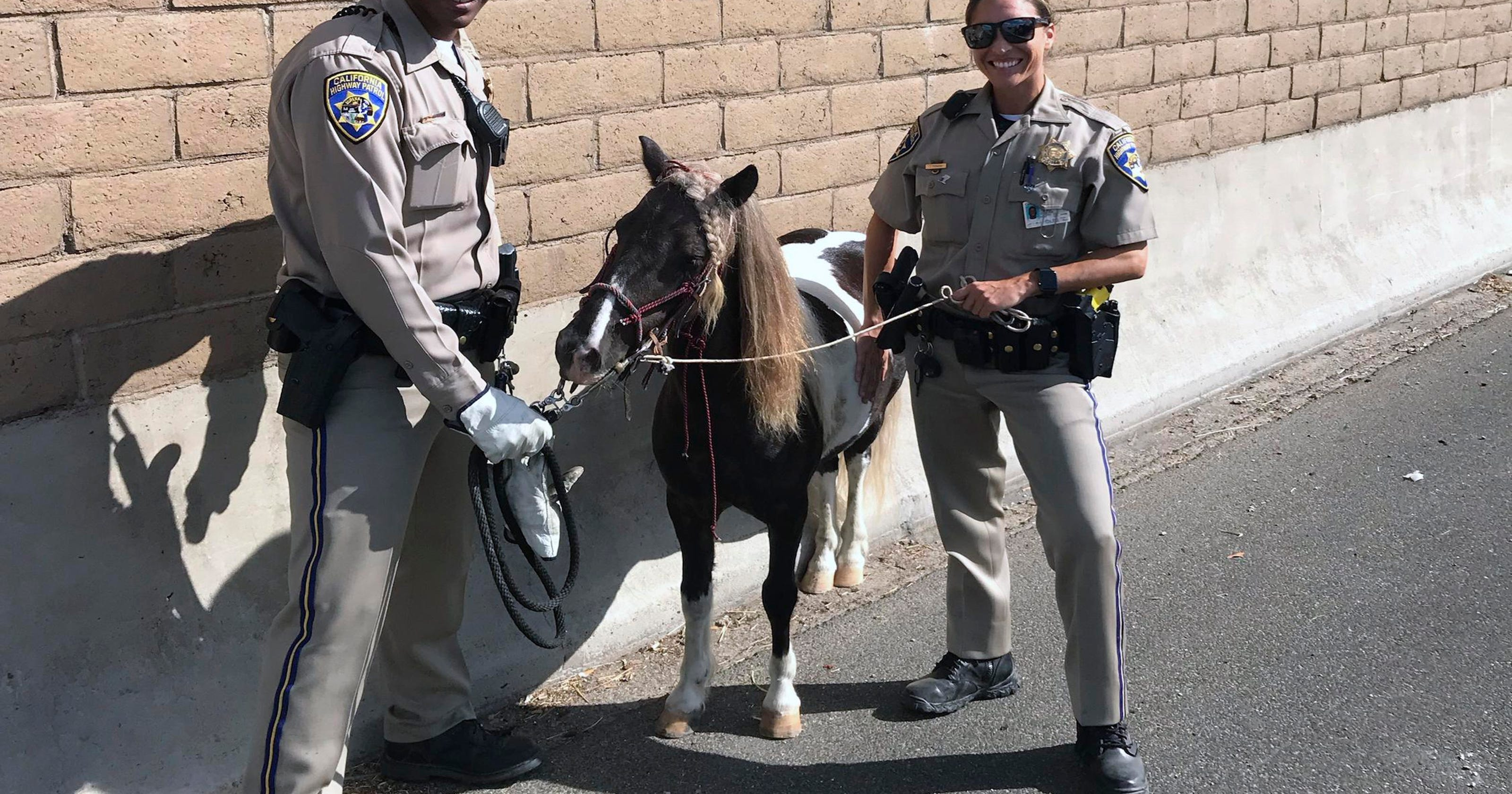 Pony hit-and-run, church in a strip club, lawnmower DUI: News from around our 50 states