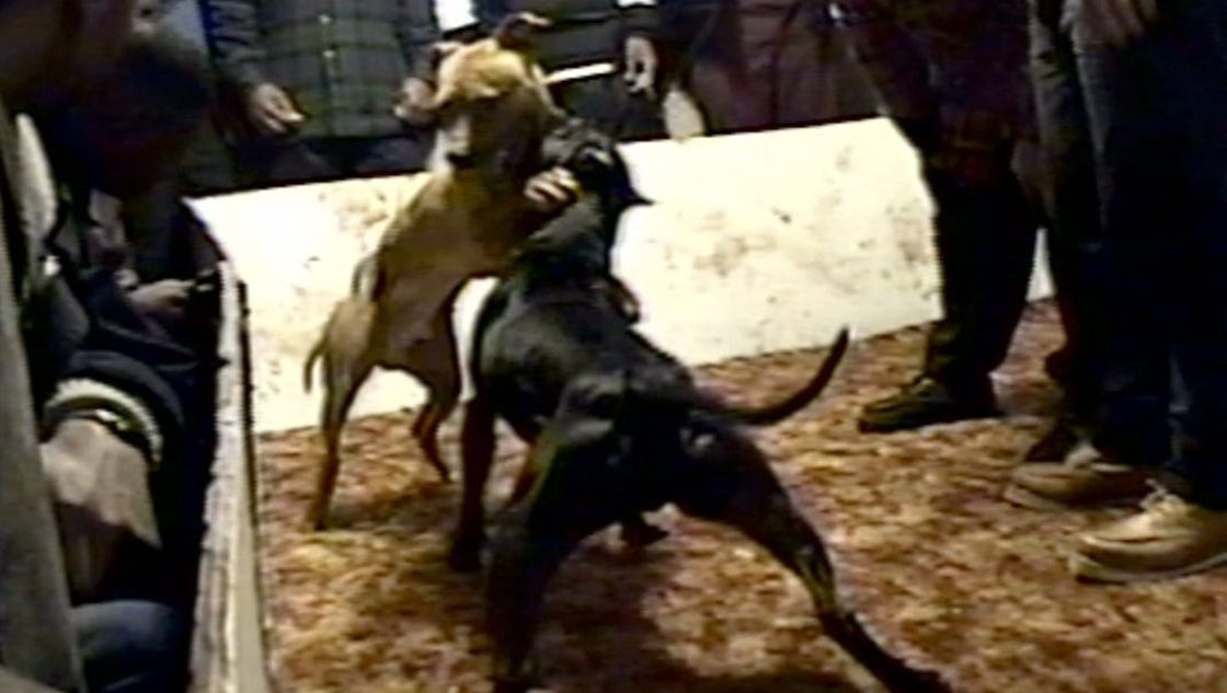 Feds indict 24 people in drug dealing, dogfighting ring - photo#36