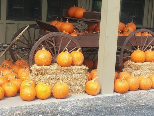 Pumpkins are primary products in this fall display.
