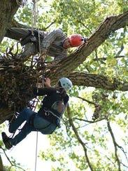 Decorah 39 s famous eagles rebuild after tragedy for Arnal decoration