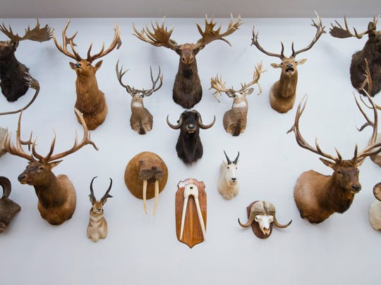 A room of mounted animals at Wonders of Wildlife National