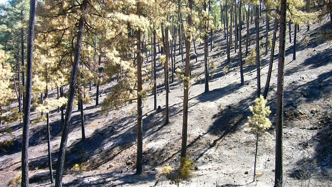 Ground vegetation that prevented erosion was stripped from the soil during the Moon Mountain Fire.