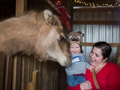 Thanksgiving Things to Do edition: Circus, Turkey Trot, Christmas on the Farm, more