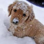 Safety tips for pets when the weather turns nasty.