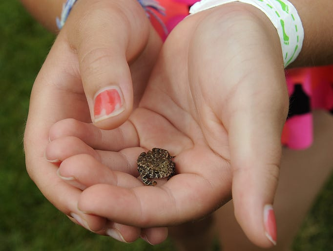 Madison Wollman, 9, holds a toad in Sioux Falls, S.D., Monday, July, 21, 2014.
