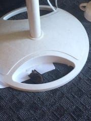 A bat lies at the base of a fan at an Ames home.