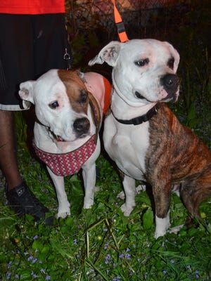 Pit bulls Molly and Sir woke up a family of six, and they all escaped a fire safely Friday morning on the Near Northside.
