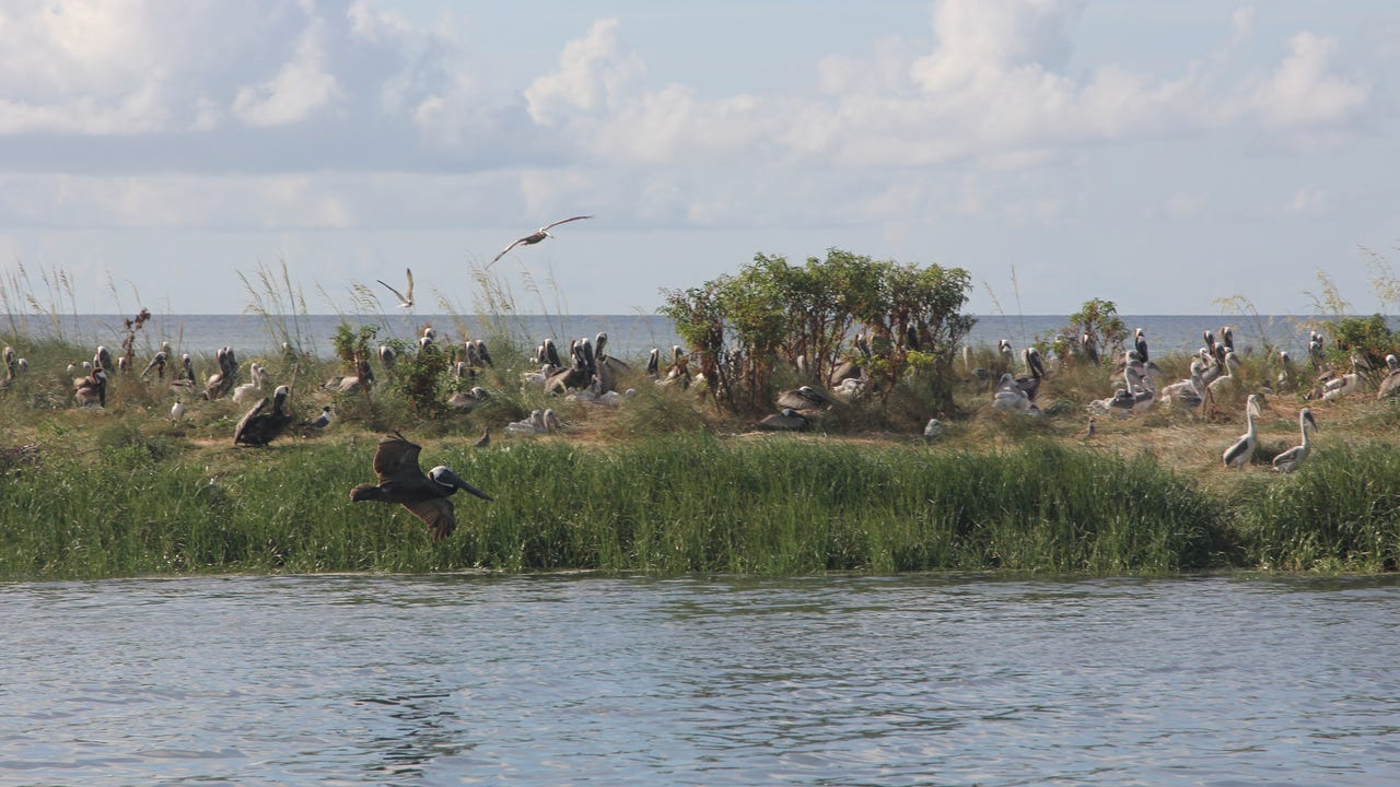 The Florida Fish and Wildlife Conservation Commission is looking at designating Lanark Reef a critical wildlife area