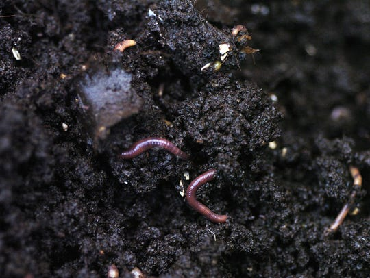 Worm bins use red worms, not earthworms.