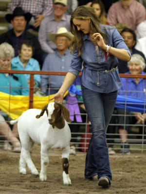 Amanda Border, a senior at Deming High School, showed the Grand Champion Lamb for the third year in a row.