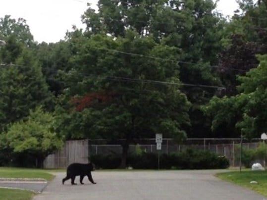 bear crop.JPG