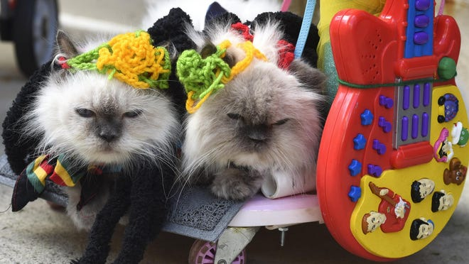 "Himalayan cats, Catlaya and Wisteria, make their third appearance in the annual Pet Parade and Contest on Saturday. Maria Yap decked them out in a look she calls ""Pawsitive Vibrations,"" in honor of  Bob Marley."