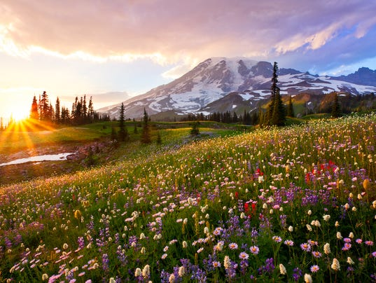 single men over 50 in mount rainier Single copy  olympic peninsula / south cascades / mount rainier / alpine lakes / central cascades / north  over 20,000 miles worth from cape flattery .