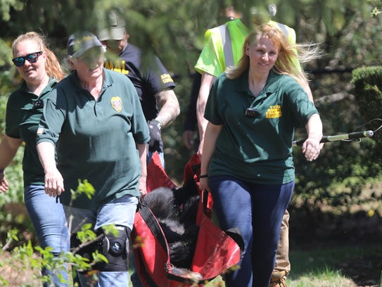 Animal control employees are shown bringing a male