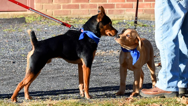 A pair of dogs get acquainted in Gypsy Hill Park New Year's Day on Thursday, Jan. 1, 2015.