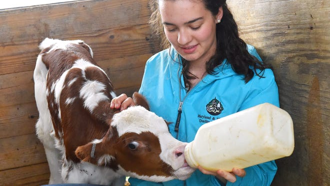 Riverheads High School senior Isabelle Leonard bottle feeds her 1-week-old red and white holstein on her family's farm near Greenville on Monday, May 23, 2016.