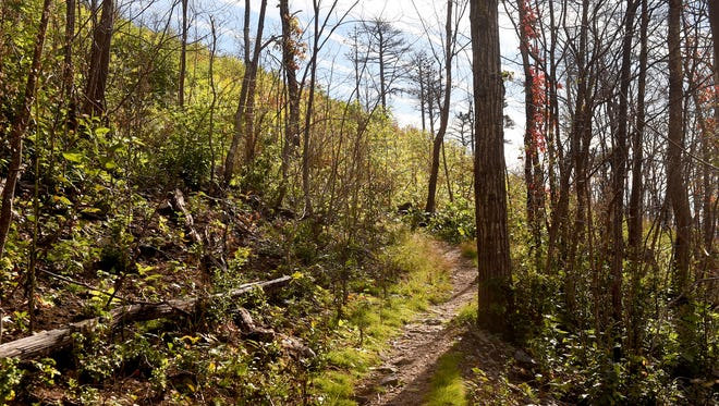 A trail in the Shenandoah National Park, just off the Skyline Drive on Tuesday, Oct. 11, 2016. The trail was among the more than 10,000 acres which burned as part of the Rocky Mountain fire which burned six months ago.