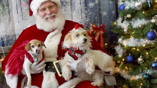 """Stella, left, and Kringle are held by Donald """"Santa Claus"""" Sloat, during the York County SPCA's annual """"Photos with Santa"""" event on Saturday, Dec. 2, 2017. The event continues the following Saturday at the shelter, running from 10am until 4pm."""