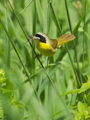 Both common and rare species flock to the Wetland Wonders due to the diverse ecosystems they provide.