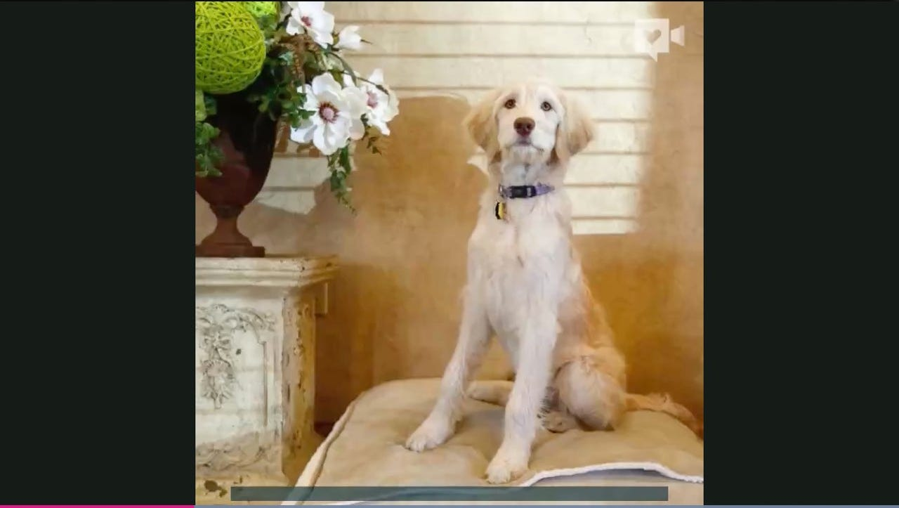 This funeral home has an adorable dog on staff