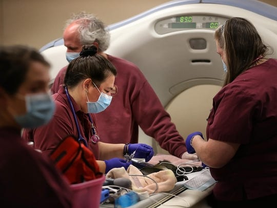 The Memphis Zoo's Senior Veterinarian Felicia Knightly (center) preps Benjamin Button, one of the zoo's spot nosed Guenon monkeys, at Memphis Veterinary Specialists Thursday morning for a CT scan. Zookeepers became concerned for the small primate after he developed a pronounced head tilt and a nose bleed.