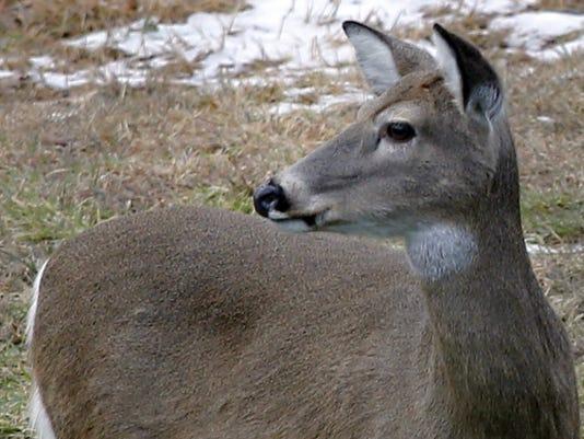 AP_Deer_Hunting_Season_PAKS1.jpg
