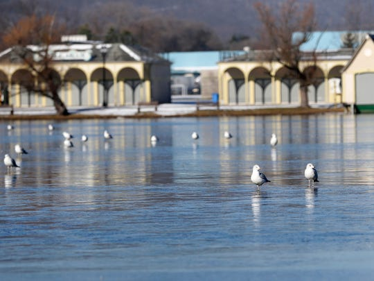 Seagulls relax on a thin sheet of ice Wednesday at Eldridge Park. The lake was mostly covered in ice, with some open areas for fowl to dip in.
