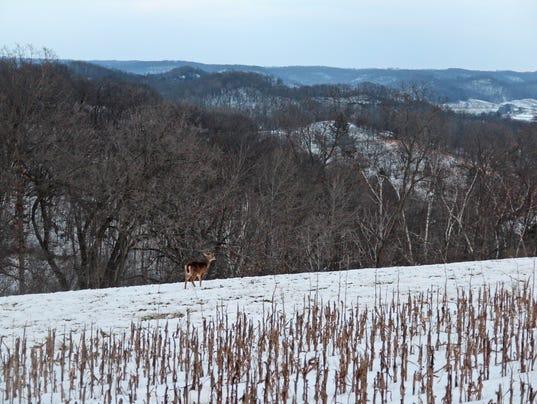 deer in field.jpg
